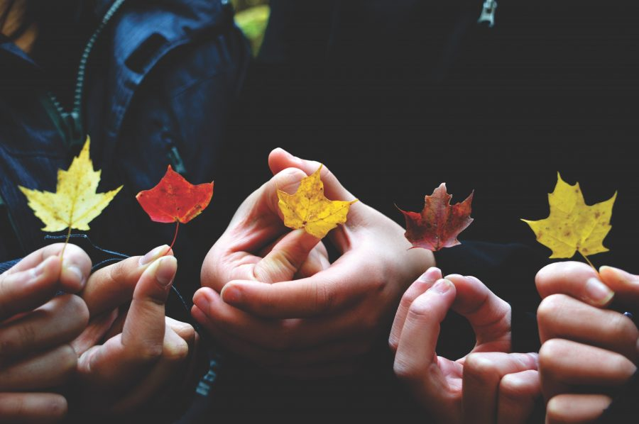 Children's hands holding different colored leaves